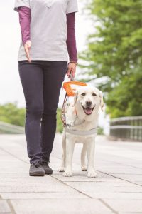 盲導犬と歩く(日本盲導犬協会提供)